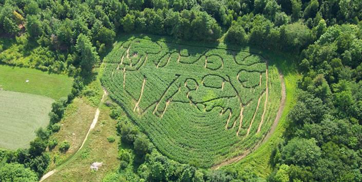 cow-maze